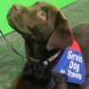 Dogs  puppies  baby dogs  baby puppies Studio uses 'Pup Pilates' to raise cash for veterans