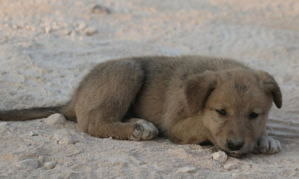Dogs  puppies  baby dogs  baby puppies Meet Bobe, the other dog at the Baghdadi raid