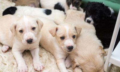 Dogs  puppies  baby dogs  baby puppies Young puppies are making individuals sick, CDC says