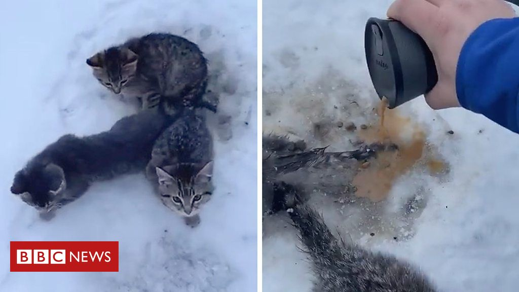 Kittens Male utilizes warm coffee to rescue kittycats frozen to ground