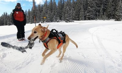 Dogs  puppies  baby dogs  baby puppies These pups are training to assist in avalanche rescue