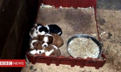 Kittens Welsh pup farm policies to be strengthened after exposé