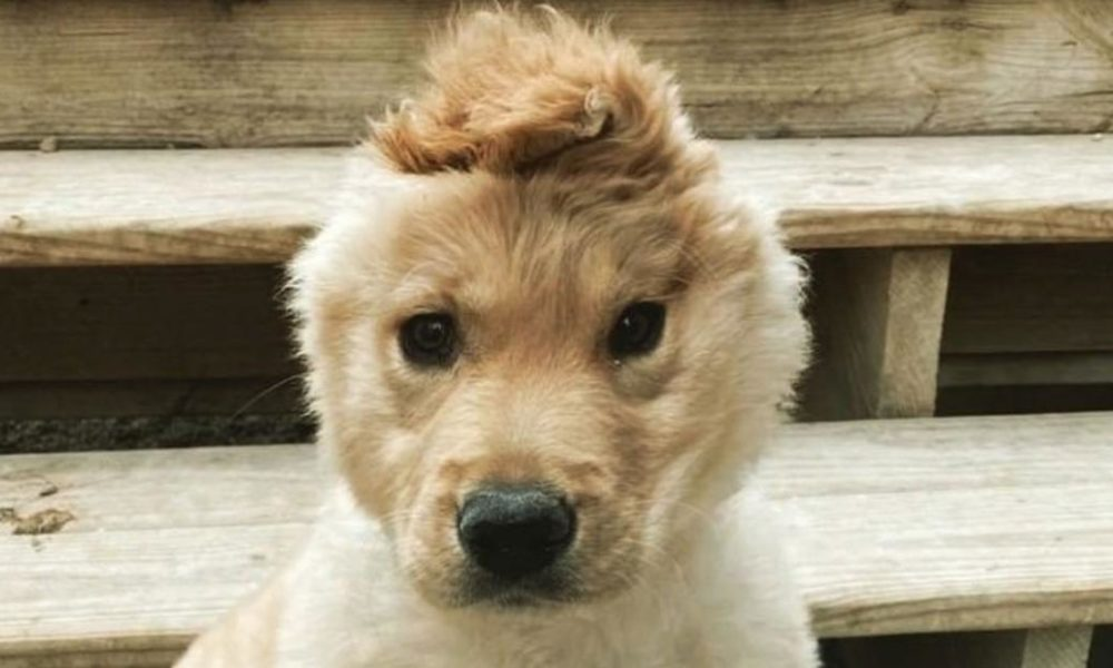 Dogs  puppies  baby dogs  baby puppies This charming 'unicorn' pup has actually become a star on Instagram and TikTok