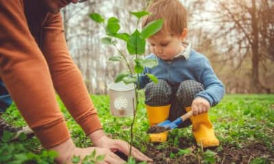 Gardening Spring cleaning: How to arrange the yard