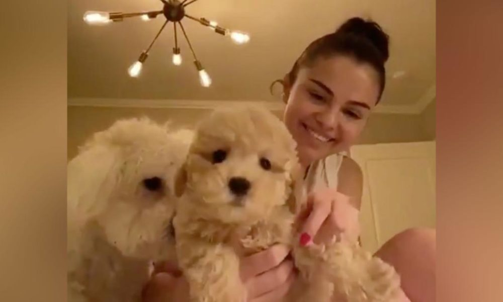 Dogs  puppies  baby dogs  baby puppies Selena Gomez and Miley Cyrus embrace young puppies while they separate in your home