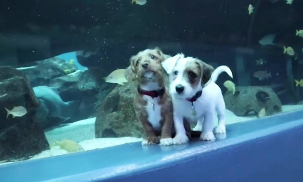 Dogs  puppies  baby dogs  baby puppies See cute young puppies run around the Georgia Aquarium