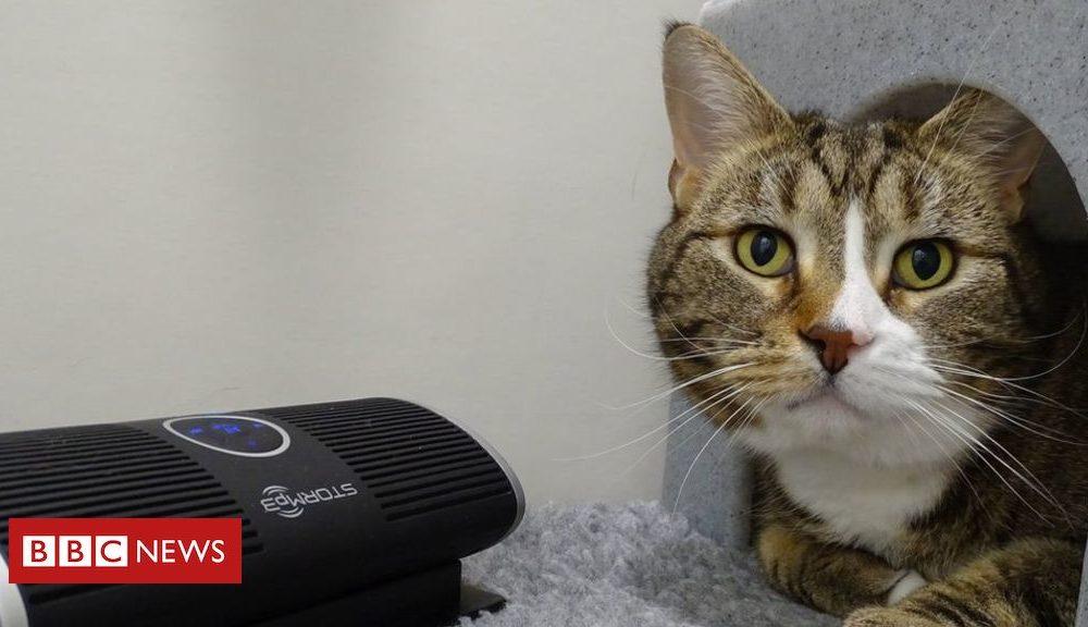Kittens Coronavirus: Relaxing sounds for felines stuck at shelters