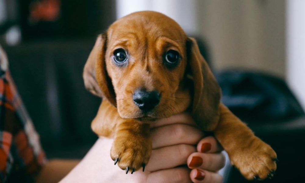 Dogs  puppies  baby dogs  baby puppies New canine? Here's everything you'll require to make your pup delighted